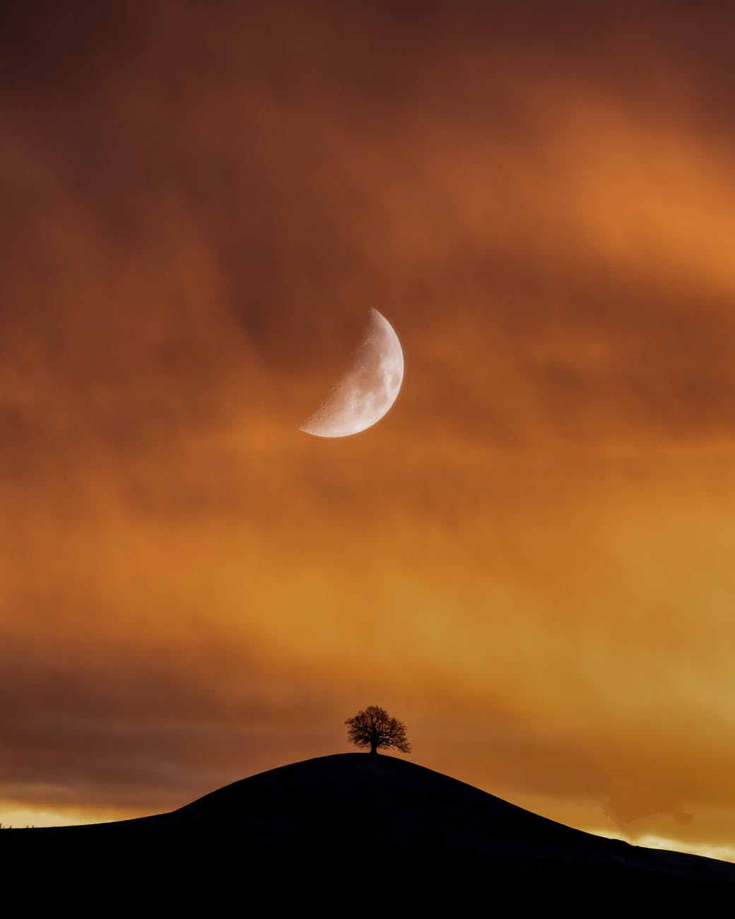 silhouette of tree under half moon